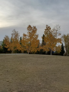 Photo of three trees with orange and yellow fall leaves on them.